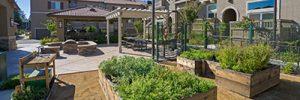Vegetable Garden Adora